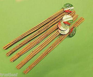 50 Pack of 60cm long Bamboo Canes for Use as Decoration / Plant Supports
